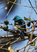 TESHS-Wildlife-Bird