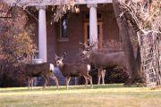 TESHS-Wildlife-Deer