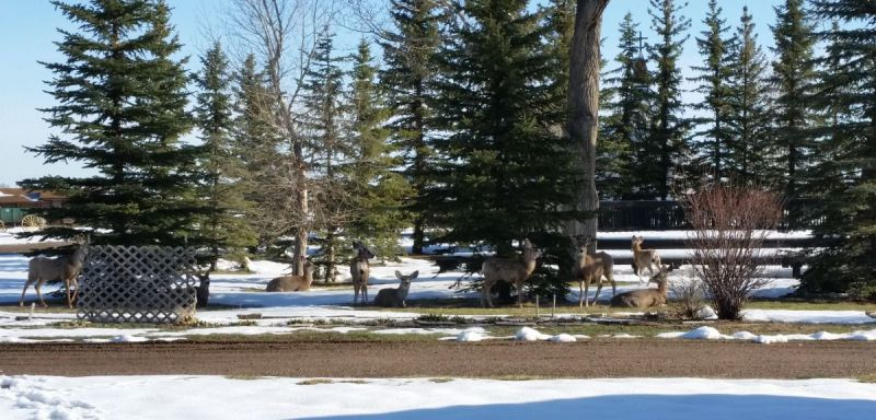 herd-of-deer