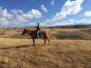 HORSEBACK-RIDING-
