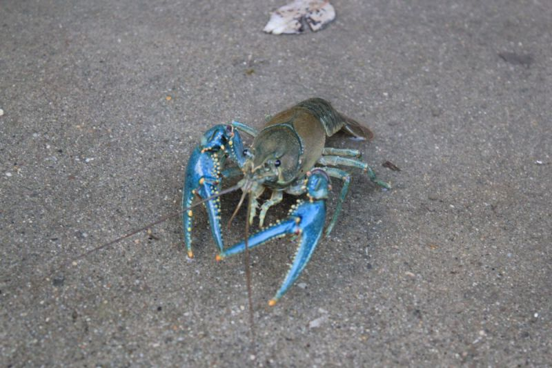 Crayfish-and-Beartooths-004